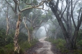 dirt-track-winding-through-misty-forest-austockphoto-000066425.jpg